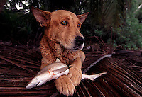 "When Palmyra Atoll changed hands, two dogs were left on the atoll to fend for themselves.  The dogs realized if they worked together they could herd baby black tip sharks into shallow water and eat them to survive.  The largest purchase to date for the Nature Conservancy is the Palmyra an atoll situated about 300 miles north of the equator.  Palmyra has five times as many coral species as the Florida Keys and three times as many as Hawaii.  It is home to the world's largest invertebrate, the rare coconut crab, and a population of red-footed booby birds second only to that of the Galapagos.  It is the last marine wilderness area left in the U.S. tropics and is home to the last remaining stands of Pisonia grandis beach forest in the world.  Palmyra was a US Navy supply base in World War II, the site of a proposed nuclear waste dump, an unsuccessful coconut plantation and of various development schemes.  Palmyra is most famous for the 1974 slaying  of a married couple which became the subject of the best-selling book ""And the Sea Will Tell,"" by Vincent Bugliosi."