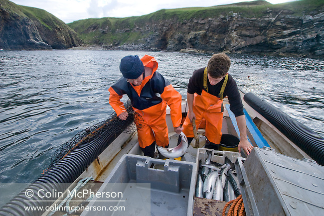 Simon Paterson and his son James at Strathy in the far north of Scotland to fishing their bag nets for wild Atlantic salmon. Mr Paterson is a third-generation salmon fisherman whose family has fished in Sutherland for over 40 years. This season is to be his last as the Government has decided not to renew the lease on the last publicly-owned fishery in Scotland.