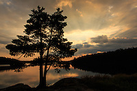 """Sunrise with My Favorite Tree""<br />