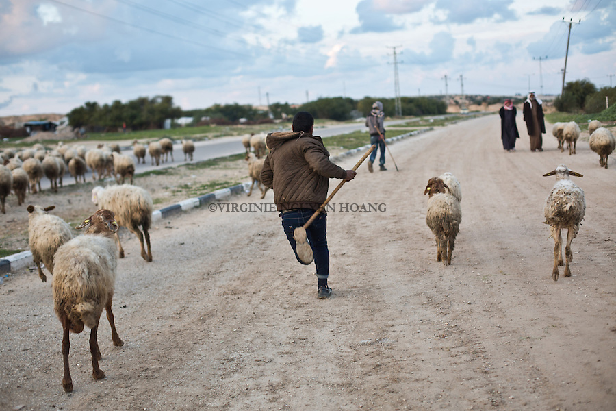GAZA,Erez: On the road between Erez Israeli side and Erez on the Gaza side, Hassan is running after his sheeps to keep them togheter. <br /> <br /> GAZA, Erez: Sur la route entre Erez c&ocirc;t&eacute; isra&eacute;lien et Erez du c&ocirc;t&eacute; de Gaza, Hassan court apr&egrave;s ses moutons pour les maintenir ensemble.