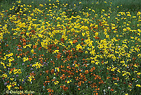 MD07-033a  Meadow - hawkweed - Hieracium spp