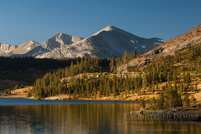 Mammoth Peak and the Kuna Crest as seen rising above Tioga Lake; just below Tioga Pass; Eastern Sierra; California