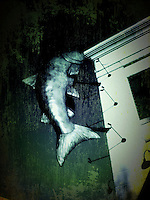iPhone app manipulated photo of fish sculpture on side of building at suburban amll.