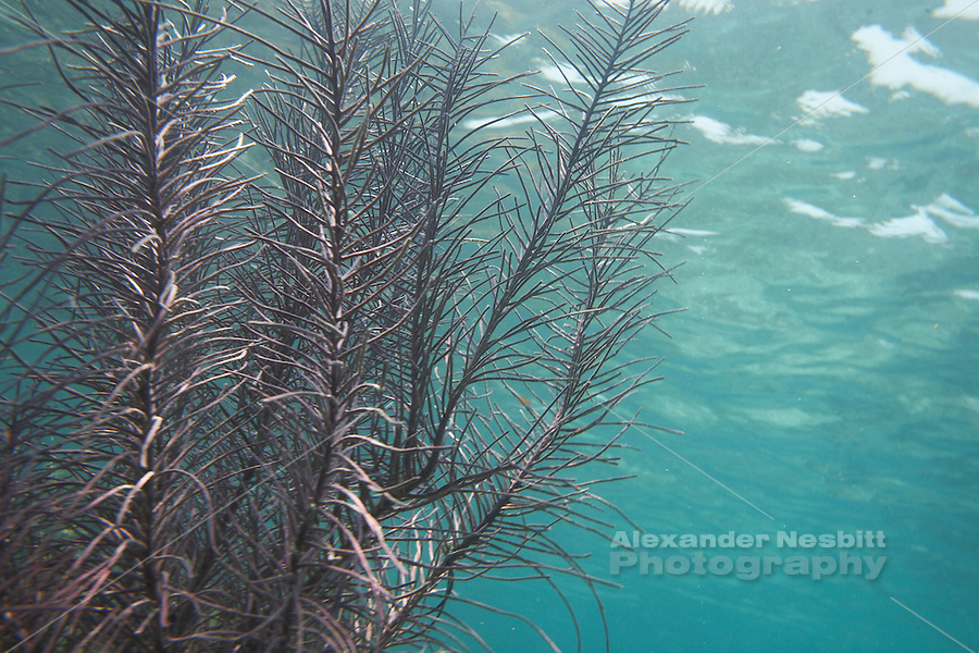 Belize, Central America - Underwater life near Placencia