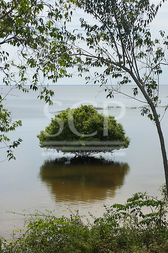 Para State, Brazil. Tapajos river. One tree in flooded forest.