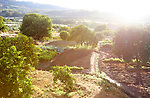 Early morning view vegetable garden in Rio Tietar river valley, Cuacos de Yuste, La Vera, Extremadura, Spain