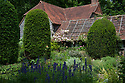 Clipped yew columns and climbing roses trained on wooden battens attached to tiled roof of The Barn, with Aconitum in the foreground. Old Garden, Vann House, Surrey, mid June.