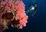 Marlon DM Marco VIncent Plush reef ,Sponsor Marco VIncent Resort, Puerta Galera, Philippines