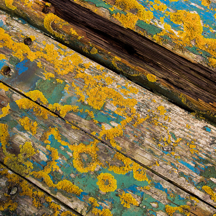 Abstract colour with yellow lichen on old wooden boards