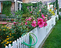 Cape Cod National Seashore, MA:  Summer flower garden with picket fence in Provincetown