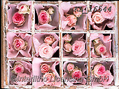 Interlitho-Alberto, FLOWERS, BLUMEN, FLORES, photos+++++,roses pink,KL16544,#f#, EVERYDAY