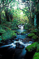 Scenic Kapena stream flows down from nearby Kapena falls. Located near the Pali Highway, Honolulu.