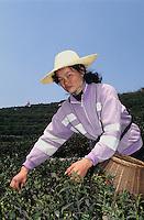 China, Hangzhou, Teepflückerin im Drachenbrunnendorf