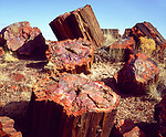USA, Arizona, Petrified Forest National Park.   Petrified logs.