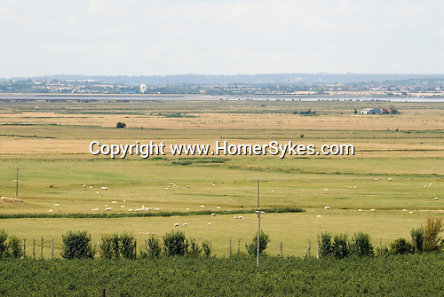 Isle of Grain. Cooling marshes, RSPB nature reserve at Northward Hill. Kent. River Thames estuary and Essex in distance.