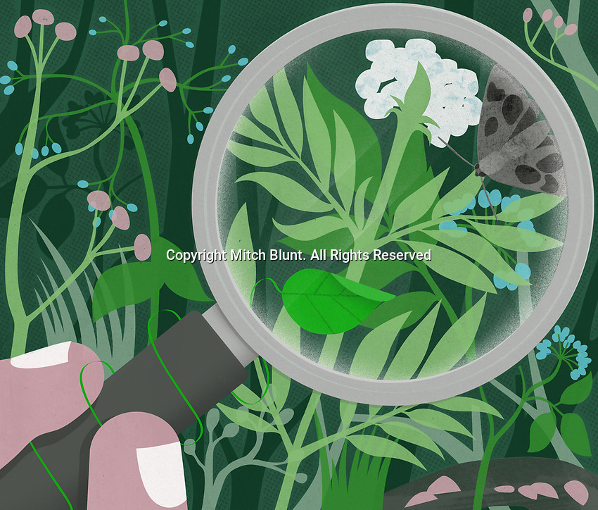 Plants and butterfly under magnifying glass ExclusiveImage