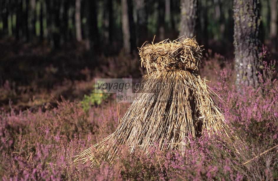 Europe/France/Aquitaine/40/Landes/Parc Naturel Régional des Landes de Gascogne/Vallées des Leyres/Pissos: Ruche dans la forêt landaise (miel de bruyère des Landes)