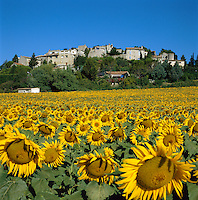 France, Provence, Valaurie: Village with Sunflowers | Frankreich, Provence, Valaurie: Dorf mit Sonnenblumenfeld