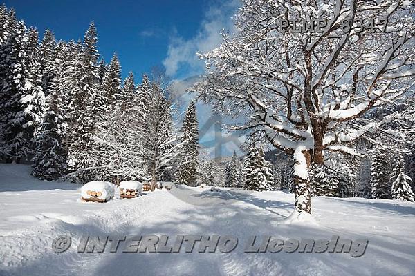 Marek, CHRISTMAS LANDSCAPES, WEIHNACHTEN WINTERLANDSCHAFTEN, NAVIDAD PAISAJES DE INVIERNO, photos+++++,PLMP8347,#xl#