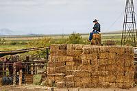 Vaquero, Chihuahua