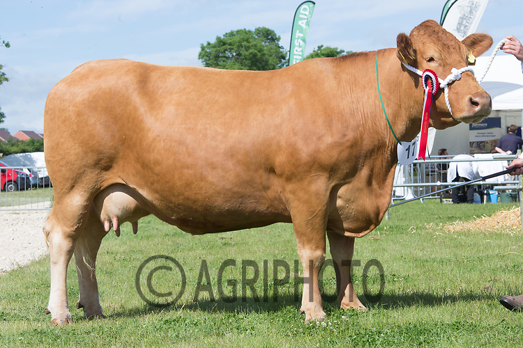 Rutland County Show 2017<br /> North View Clover owned by Oliver Brewin<br /> Picture Tim Scrivener 07850 303986<br /> &hellip;.covering agriculture in the UK&hellip;.