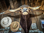 Steer head over the door at the Paradise Valley Bar and Grill, Nevada