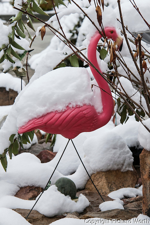 A pink flamingo lawn ornament stands covered in snow.