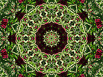 This is a second version of my Burgundy and Green flower mandala. I have created it by digitally enhancing one of my photographs from Granada gardens in Spain. It is full of vibrant colours and you can almost feel the sunshine of the place where I have photographed it. Could work well to enhance Feng Shui of your place, particularly for wood and fire related element