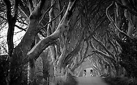 riding through The Dark Hedges in Northern Ireland is like riding into a spooky fairy tale