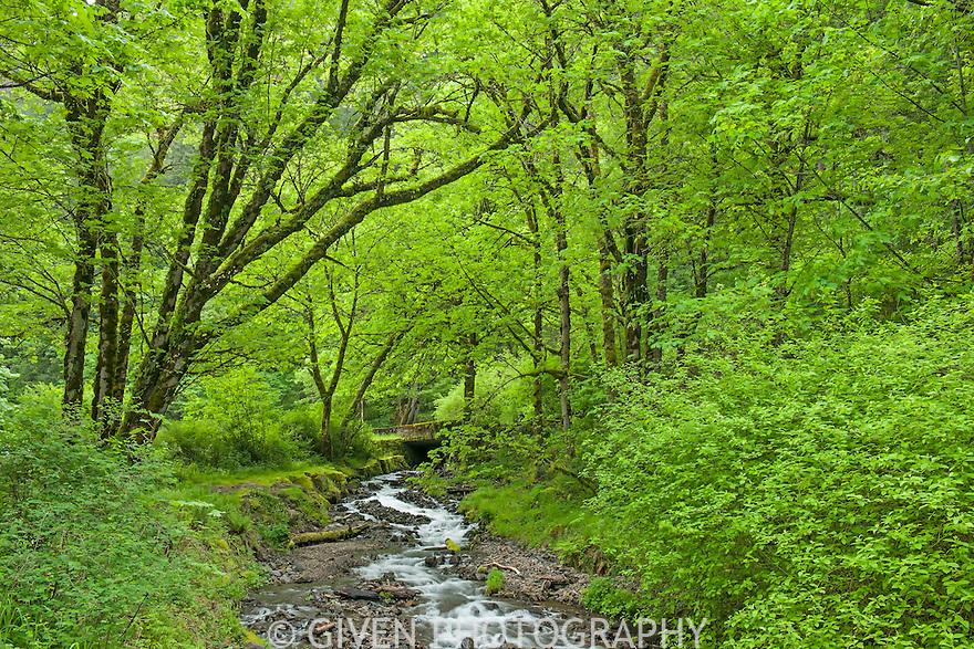 Wahkeena Creek in spring, Columbia Gorge, Oregon