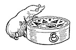 Mole with compass (illustration)