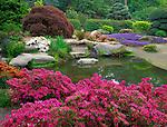 Seattle, WA<br /> Kubota Garden city park, flowering azalea and ajuga with pond reflections