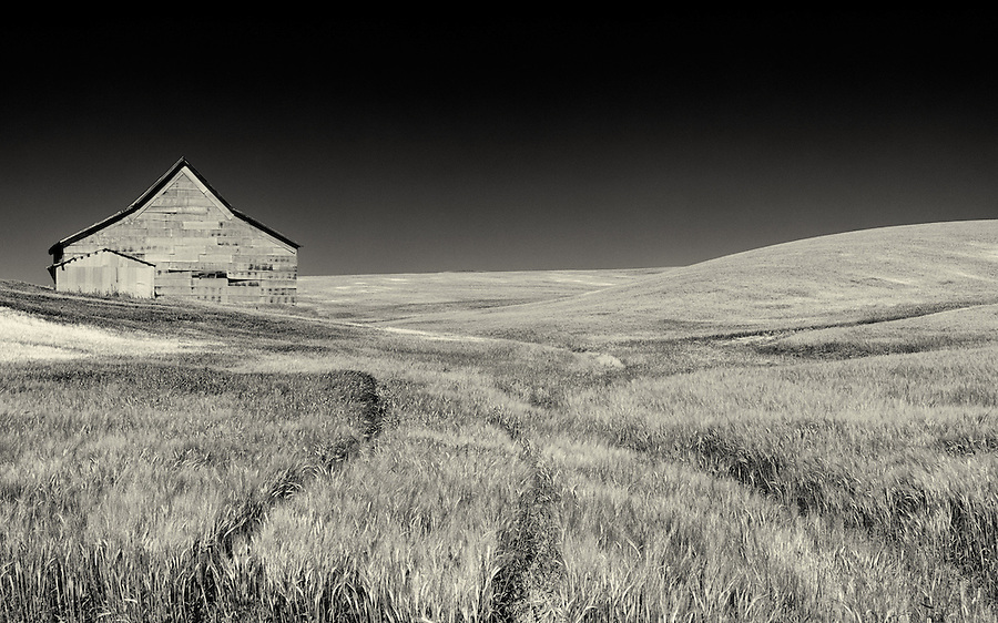 An infrared-like view of a barn and surrounding wheat field in Eastern Washington.