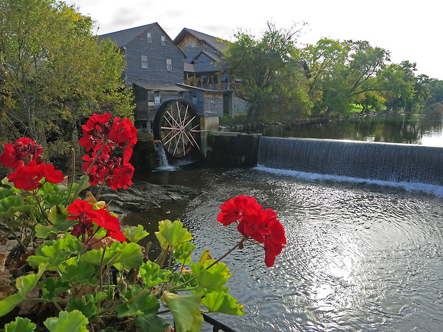 Flowers and Old Mill