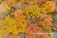 63876-02304 Aerial view of fall color trees Stephen A. Forbes State Park Marion Co. IL