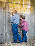 Taking a peek--two boys look through a knothole in the wooden fence at the 79th Amador County Fair, Plymouth, Calif.<br /> <br /> <br /> #AmadorCountyFair, #PlymouthCalifornia,<br /> #TourAmador, #VisitAmador,