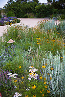 Colorado front yard meadow garden by driveway with Erigeron, yellow Ratibida flowers, wheat grass (Agropyron or Pascopyrum smithii), and chamisa, design by Tom Peace