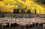Sheep Ranch, San Juan Mountains, Colorado