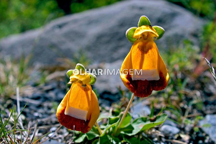 Parque Nacional Torres del Paine. Chile. 2004. Foto de Maristela Colucci.
