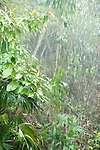 Heavy Rainfall in jungle, Panama, Central America, Gamboa Reserve, Parque Nacional Soberania