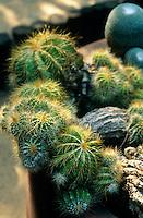 A portrait of a cactus plant