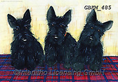 Kate, CUTE ANIMALS, LUSTIGE TIERE, ANIMALITOS DIVERTIDOS, paintings+++++Scotties on tartan rug 3.,GBKM485,#ac#, EVERYDAY