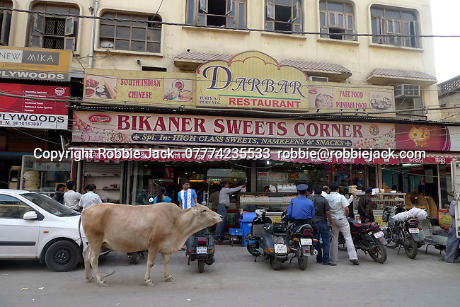 Cow in the street in the Paharganj district of New Delhi, India.