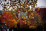 10.17.18 - Autumn's Song....