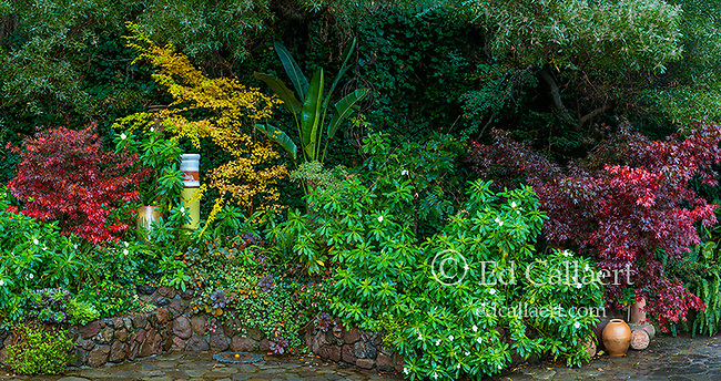 Garden Detail, Cypress Garden, Mill Valley, California