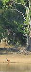 Yala National Park Sri Lanka<br /> Jungle Fowl