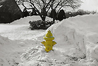 Yellow in the Snow