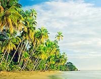 Palms along Caribbean shore    Cahuita National Park,  Costa Rica      Cahuita Beach    Sunrise