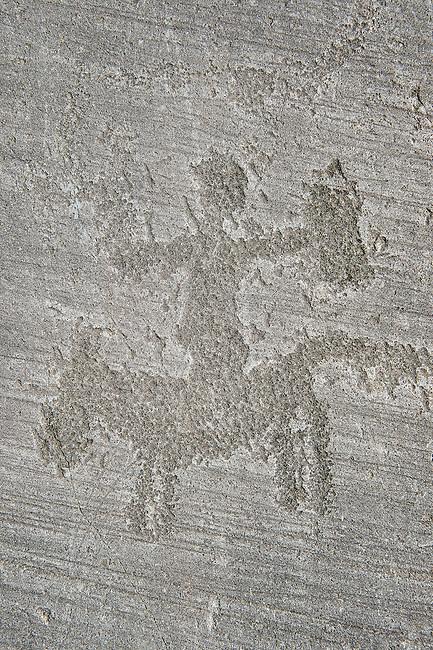 Petroglyph, rock carving, of a warrior riding a horse. Carved by the ancient Camuni people in the iron age between 1000-1200 BC. Rock no 6, Foppi di Nadro, Riserva Naturale Incisioni Rupestri di Ceto, Cimbergo e Paspardo, Capo di Ponti, Valcamonica (Val Camonica), Lombardy plain, Italy