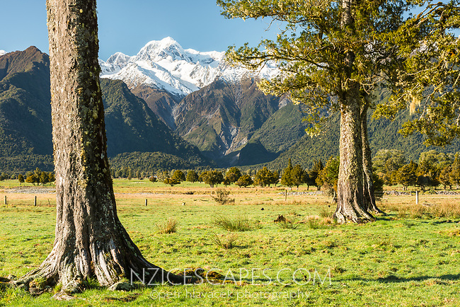 Farmland near Fox Glacier village with mountains Southern Alps in background, Westland Tai Poutini National Park, UNESCO World Heritage Area, West Coast, New Zealand, NZ